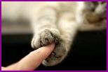 Возбудитель кошачьей болезни помог создать экспериментальную вакцину от рака